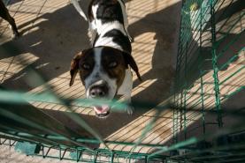 Veterinários dos municípios registam com agrado criação do provedor do animal