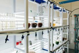 Peniche: Politécnico de Leiria dinamiza curso avançado sobre a produção e aplicações de microalgas