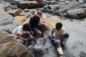 Museu da Lourinhã revela novos achados de dinossauros carnívoros e herbívoros