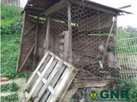 GNR resgata cão no concelho de Torres Vedras por maus-tratos dos donos