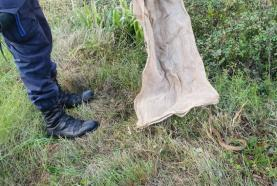 Oeste: GNR resgata ave debilitada e devolve cobra à natureza