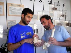 Estudo coordenado por paleontólogo da Lourinhã investigou extinção dos mamíferos em Portugal