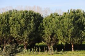 Entrou em vigor o Programa Regional de Ordenamento Florestal de Lisboa e Vale do Tejo que abrange a região Oeste
