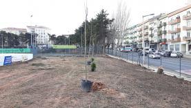 Município da Lourinhã procede à arborização de novas espécies em duas ruas da vila