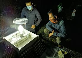 Planalto das Cesaredas foi palco da 11ª sessão de amostragem da Estação de Estudo de Borboletas Nocturnas