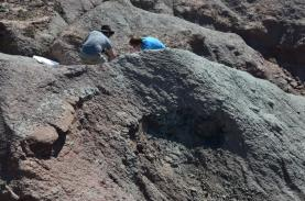 Cinco espécies de crocodilos viveram há 150 milhões de anos com dinossauros na Lourinhã