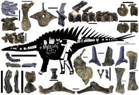 Esqueleto de dinossauro de Atouguia da Baleia resolve antigos mistérios na paleontologia