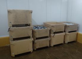GNR apreendeu no Porto de Peniche quase duas toneladas de sardinha por excesso de captura