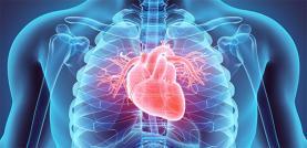 """Sociedade Portuguesa de Cardiologia alerta: """"colesterol é o inimigo silencioso da saúde cardiovascular e pode levar à morte"""""""