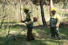 Município da Lourinhã alerta que termina este domingo o prazo legal para limpeza de terrenos florestais