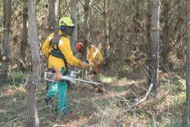 Sessões de esclarecimento sobre limpezas florestais no concelho da Lourinhã