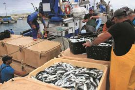 Organizações ibéricas da pesca da sardinha querem mais de 20 mil toneladas de quota