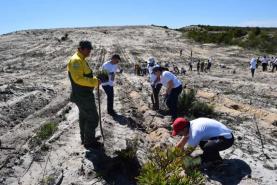 Brigada de Sapadores Florestais do Oeste ajudam a plantar 1600 pinheiros bravos na região