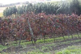 Comissão Europeia adopta novas medidas de apoio a sectores do vinho e frutas e legumes